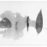 Pfad, 2000, 30 x 40 cm, Zeichnung mit Tusche auf Folie