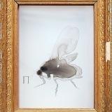 Queen Bee, 2000, 54 x 43 x 22 cm, Zeichnung mit Tusche auf Folie im Schaukasten
