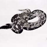 2 Crotalus cerastes 2009 Tusche auf Transparentfolie 70 x 100 cm