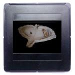Modell für eine Schale, 1986, 5 x 30 x5 2 cm, weißer Ton